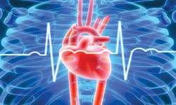 Hebat! Ilmuwan Iran Gunakan Susu Kambing untuk Obat Serangan Jantung