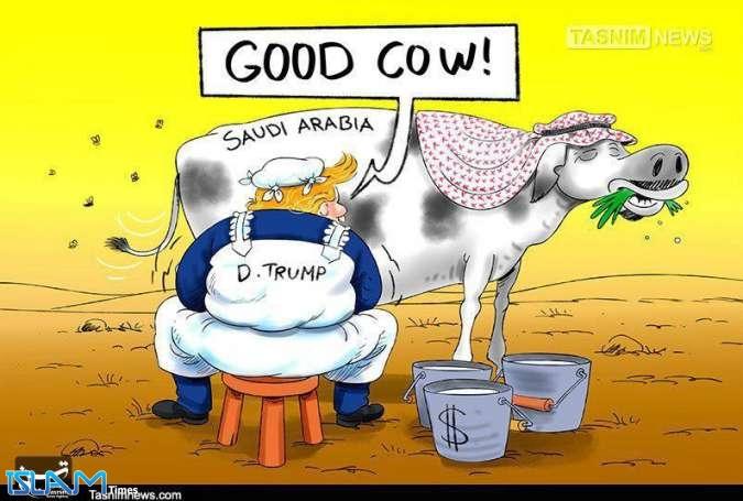 استفاده ابزاری آمریکاییها از گاوهای شیری و گاوهای وحشی
